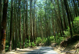 Mysore – Ooty – Coorg Students Tour