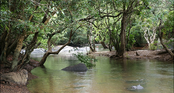Wayanad-Coorg Study Tour Package from Kochi