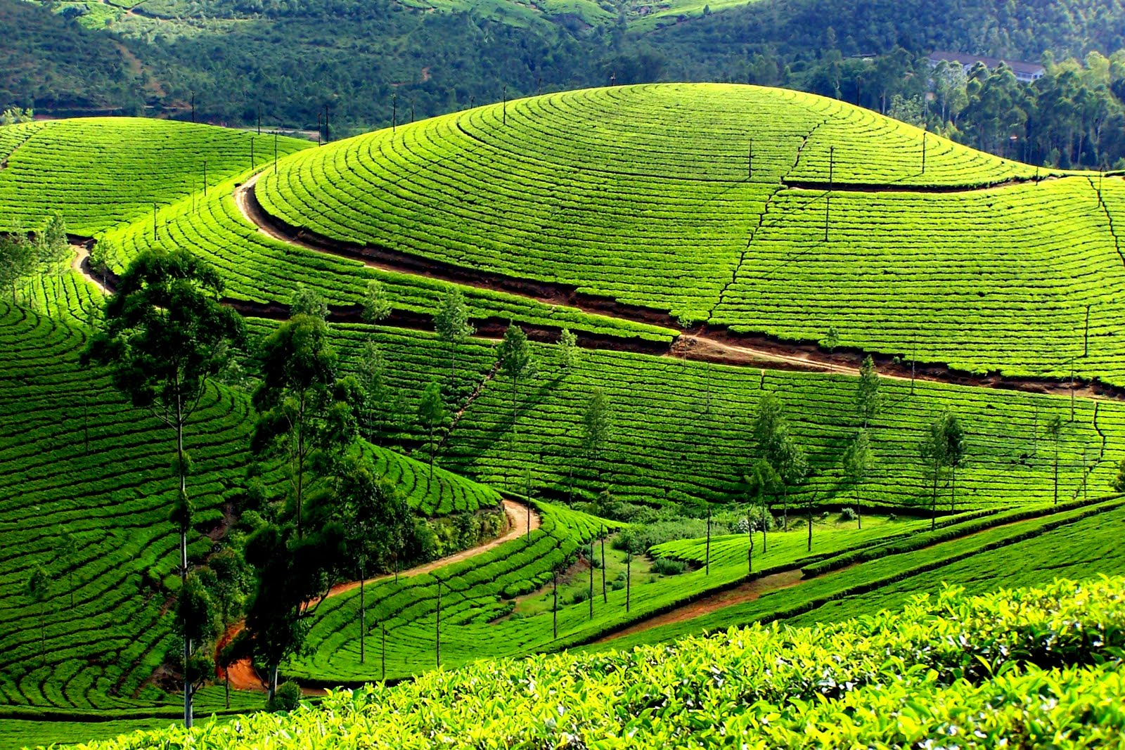 Cochin – Munnar Students Tour Package